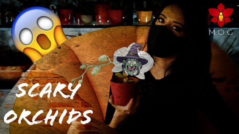 Orchids that scare me! 😱(Halloween Special)