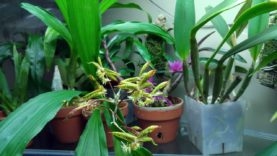 Orchids update September 2020