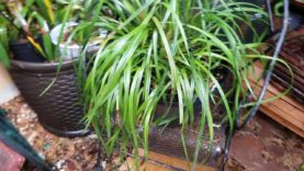 Orchids: What's going on in the EOG East Orchid and garden.