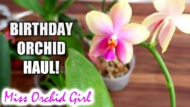 Orchids with flower spikes & their stories – Updates and thoughts