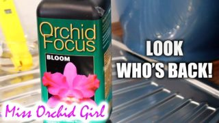 Orchid Focus fertilizer – Some surprising conclusions!
