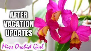 Vacation is over, back to Orchid duty! – Updates, good & bad news