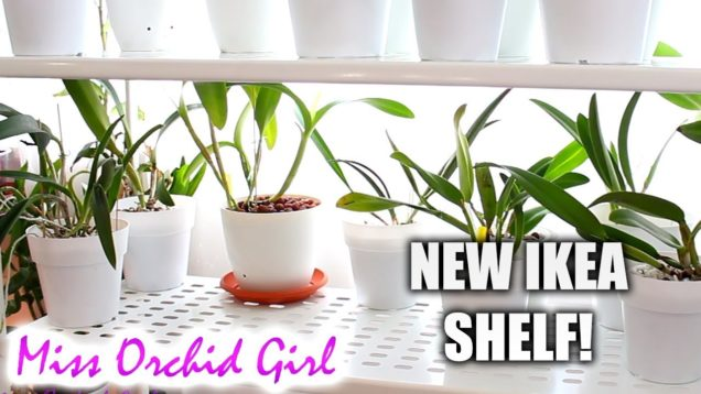New shelf for my Orchids! – IKEA Mulig storage series