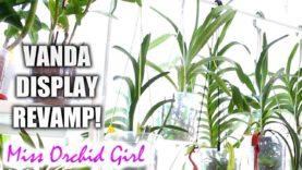 Vanda Orchids display makeover! – Affordable, practical and space saving stand