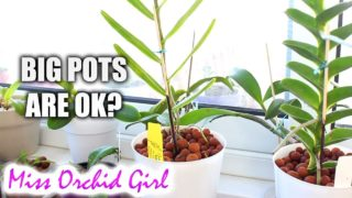 Does Orchid pot size matter in semi hydroponics?