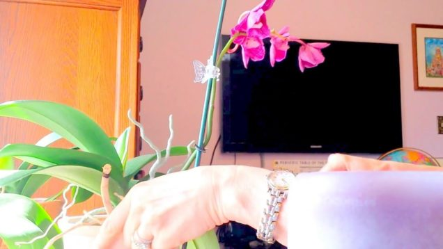 How to cut a spike on a phalenopsis.