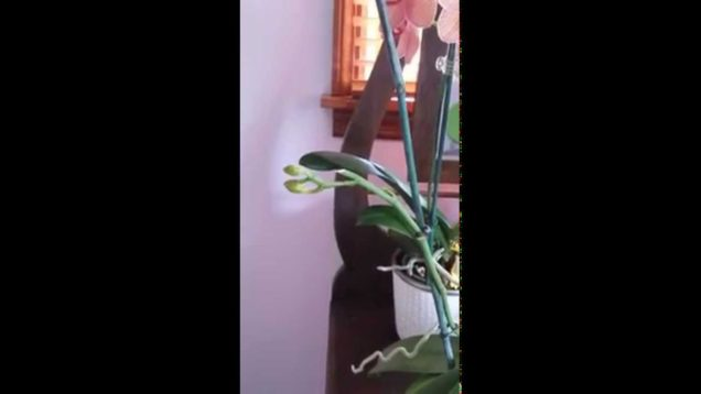 When to cut spikes on orchids. #orchids
