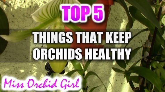 5 things that keep your Orchids healthier