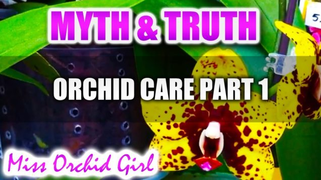 Truth and Myth with Orchid Care Part 1