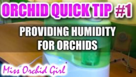 Orchid Tip #1 – Providing humidity for orchids