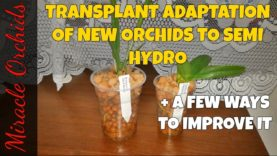 The transplant adaptation of new orchids to semi hydroponics   Converting orchids to semi hydro