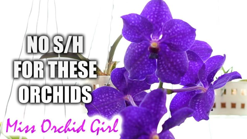 What makes semi hydro horrible for some? – Orchids I don't keep in s/h