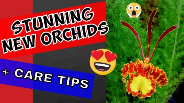 Orchid Unboxing 2018: STUNING new orchids + some Orchid CARE TIPS