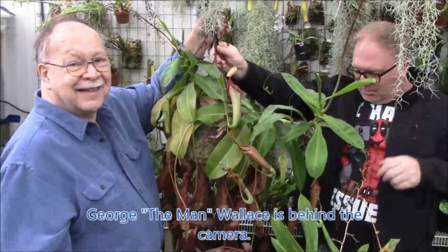 Pruning and Propagating Nepanthes