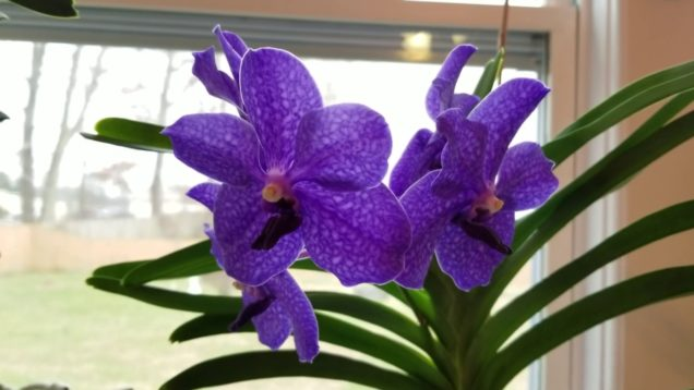 January 2019 Orchid Blooms and Spikes Tour!