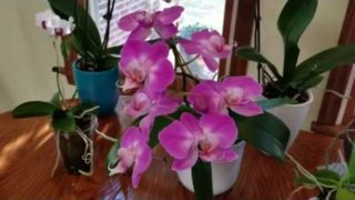 Let there be light on my orchids!  Choosing the right light for winter.