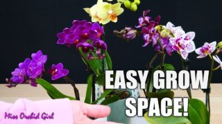 Creating a grow space for Mini Phalaenopsis Orchids in a dark room or office!