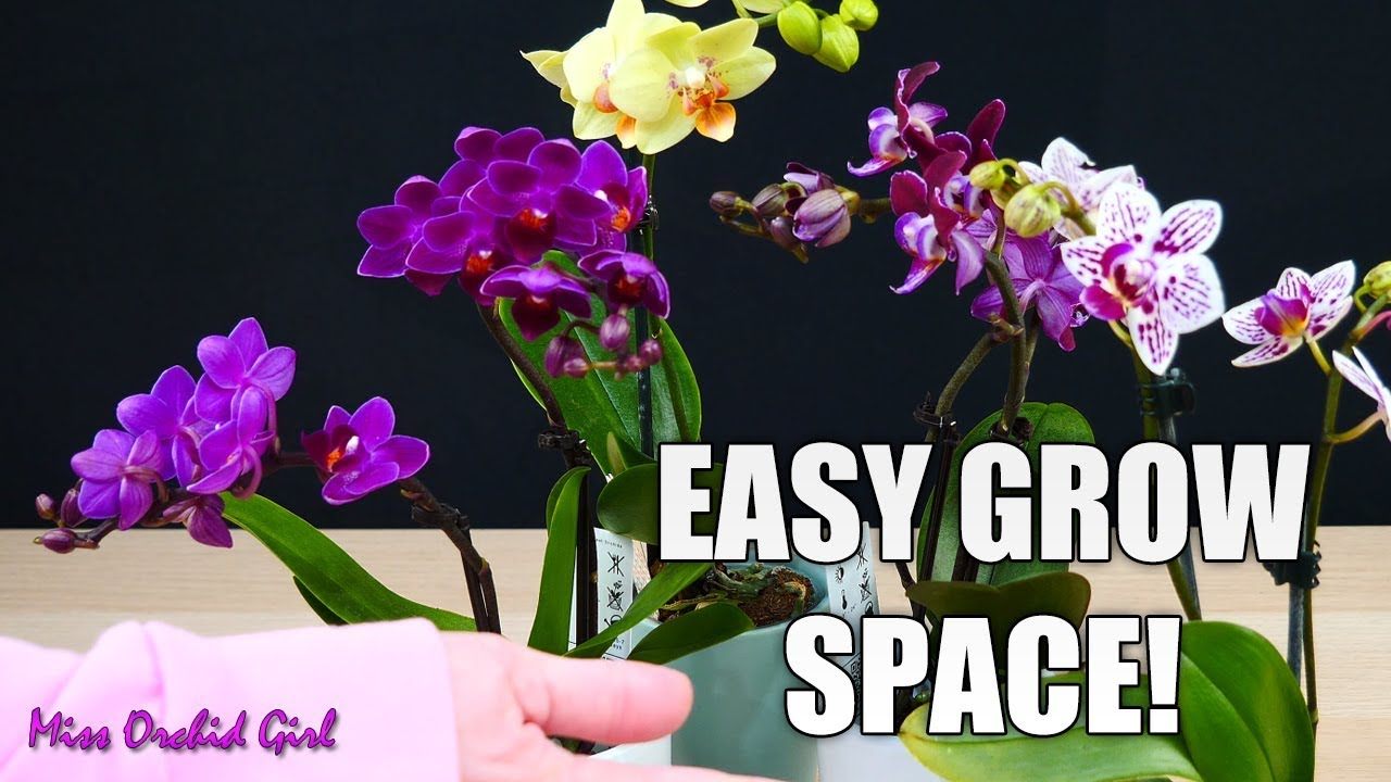 Creating a grow space for Mini Phalaenopsis Orchids in a dark room