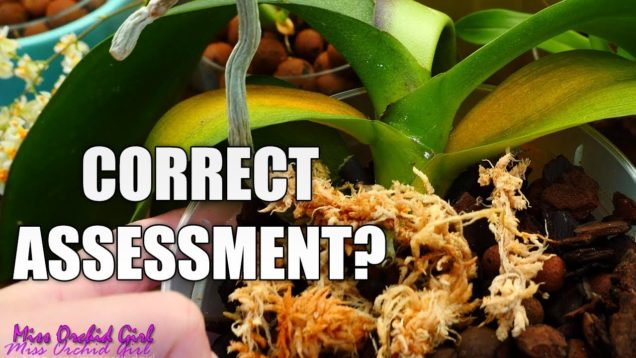 5 Natural Orchid responses that are mistaken for other problems