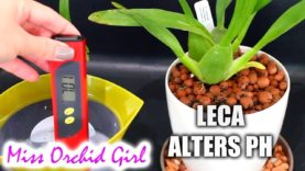 Peat granules with Orchids in semi hydro – Final thoughts