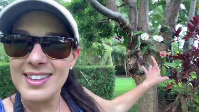 Phalaenopsis Orchids, How to Mount and Remove Them from Trees