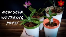 Repotting Mini Phalaenopsis, Paphiopedilum & Dendrobium Orchids in the new self watering pots!
