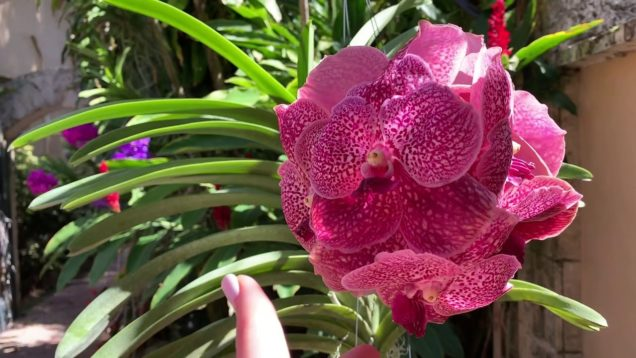 RF Orchids Behind the Scenes, Private Tour