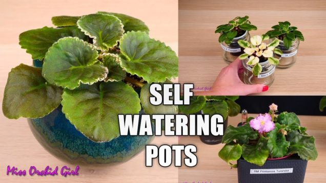 Self watering pots – DIY, Types, Pros & Cons (For African Violets & other plants)
