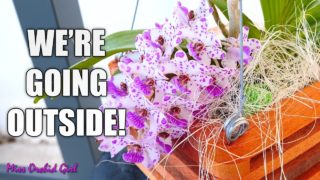 Spring plans for my Orchids – Outside & inside growspace, who goes, who stays?