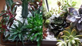 Succulents update… made some succulent arrangements