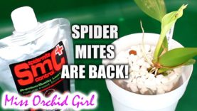 Testing out SMC Spider Mite Control for Orchids