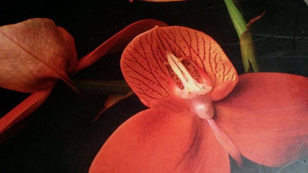 "The ""75th Anniversary"" Florida West Coast Orchid Society Show & Sale"