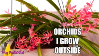 The Orchids I grow outside – Very heat tolerant Orchids!