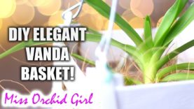 Tolumnia Orchids in baskets – Setup experiment