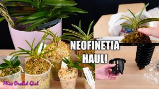 Unboxing Neofinetia Orchid Haul! – A new passion is starting! 😍