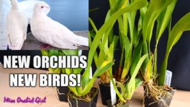 Unboxing Orchid gift + My new birds! 🕊🕊