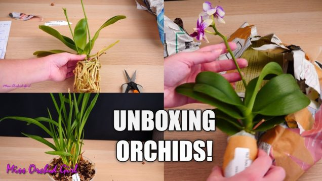 Unboxing surprise Orchids! – Adopting Orchid collection from my subscriber
