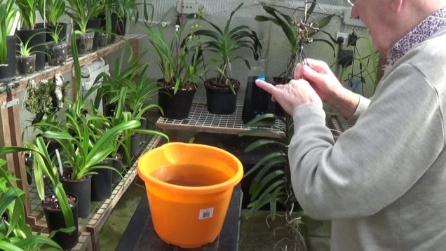 Watering , feeding and a look round the greenhouse.