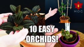 Where we buy Orchids from & How much do they cost? + About 'rare' Orchids